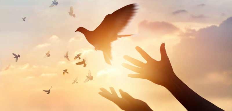 mains libérant une colombe en contre jour - croyances et suicide